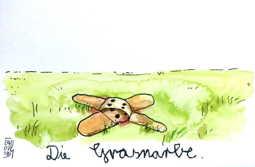 Die Grasnarbe. Tusche, Aquarellfarbe und Buntstift auf Aquarellpapier, DIN A 6, 4.7.2018, Ulrike Martens.