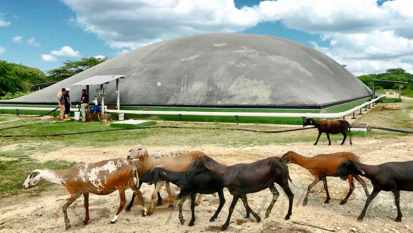 Covered lagoon digester - biodigestor para matadero - frigorifico - rastro de reses