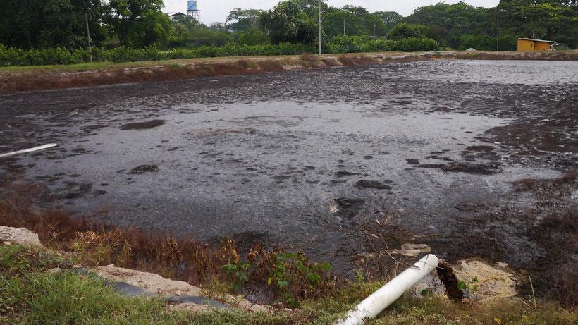 Laguna tratamiento de POME afluentes de extracción  aceite de palma africana