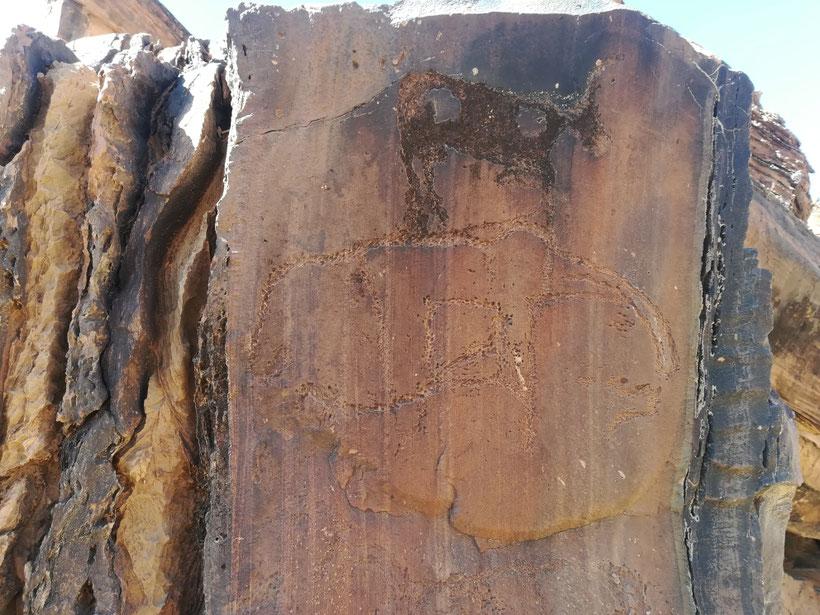 Ein ca. 12000 Jahre alter Elefant