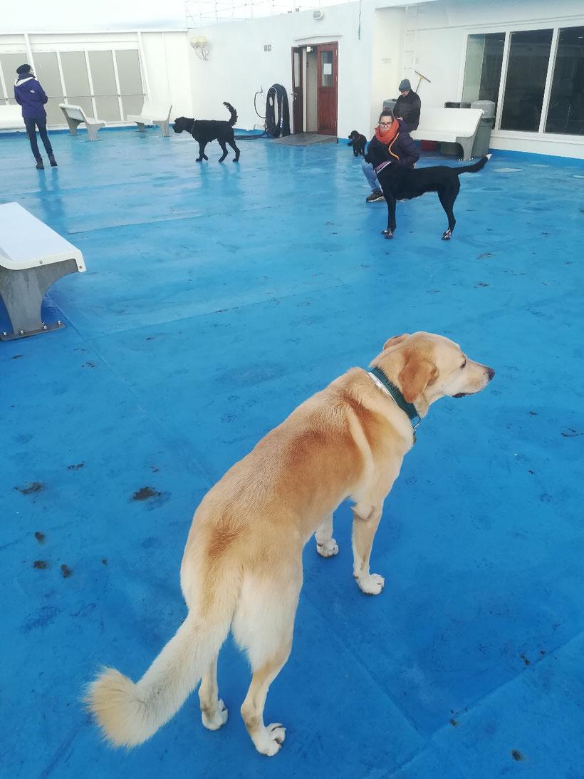 Und wieder sind einige Hunde mit an Bord