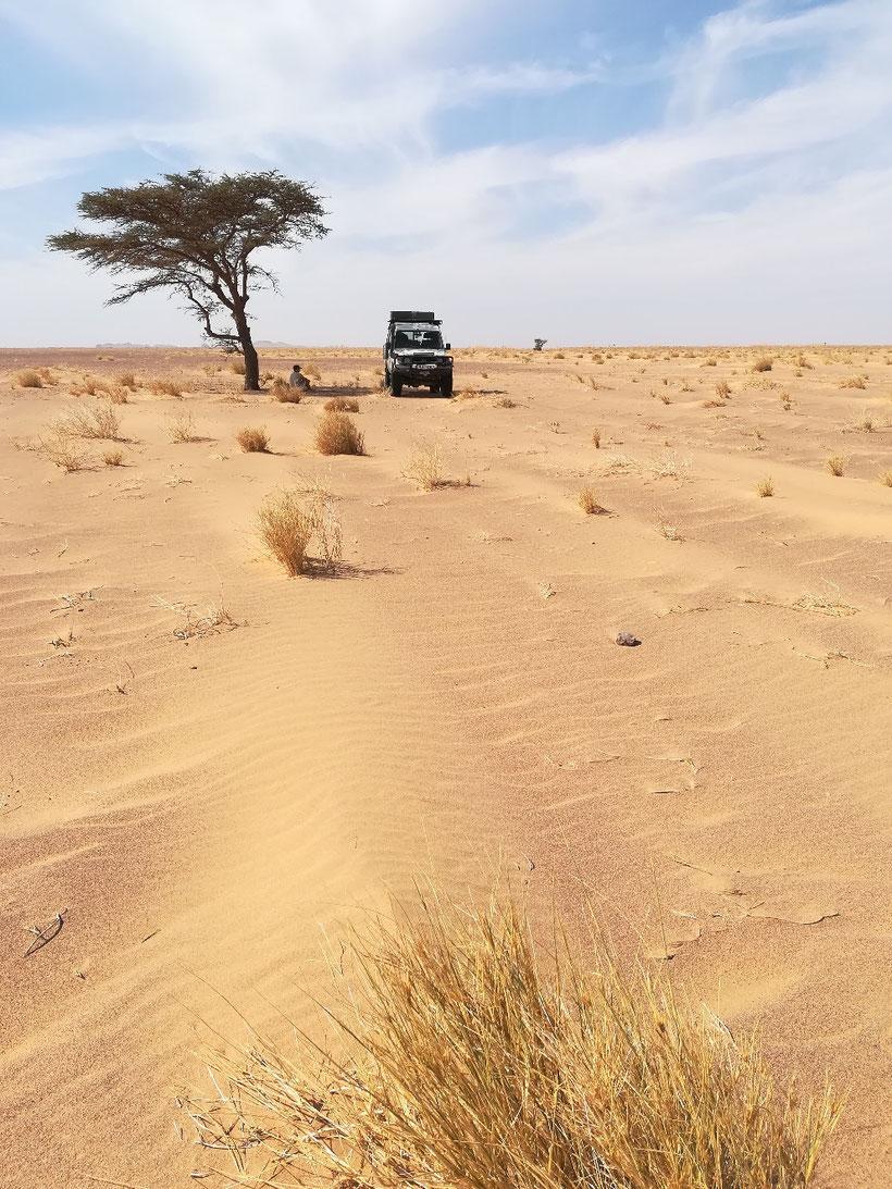 Genau hier verläuft laut OSM-Karte die Grenze zwischen Mauretanien und der Westsahara