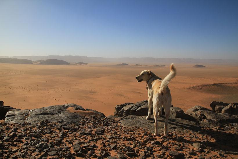 Aisha ist eine Labrador/Kuvasz Hündin, jetzt schon 10 Jahre alt und hat mit uns bereits über 44 Länder bereist.
