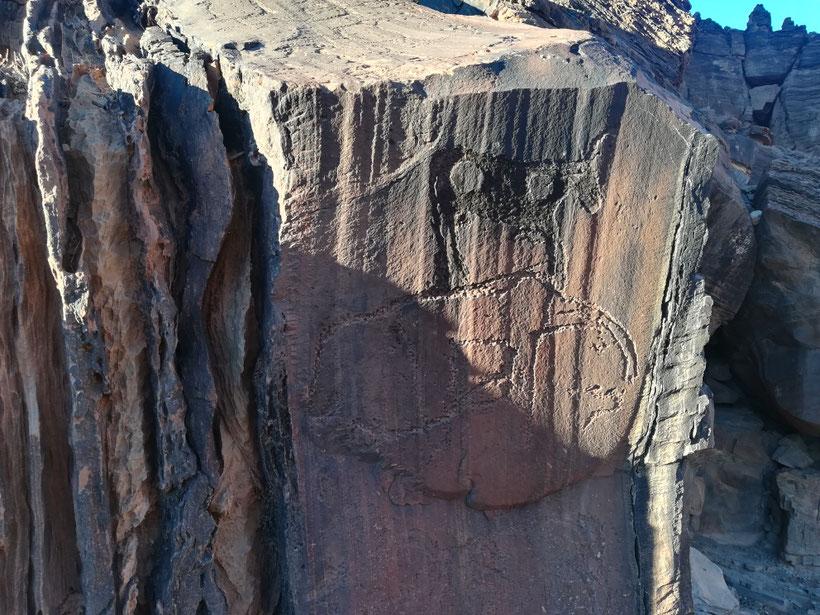Felsgravuren - hier ein Rind und der Elefant