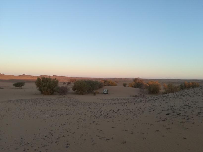 Kleine Oase im Auge der Sahara