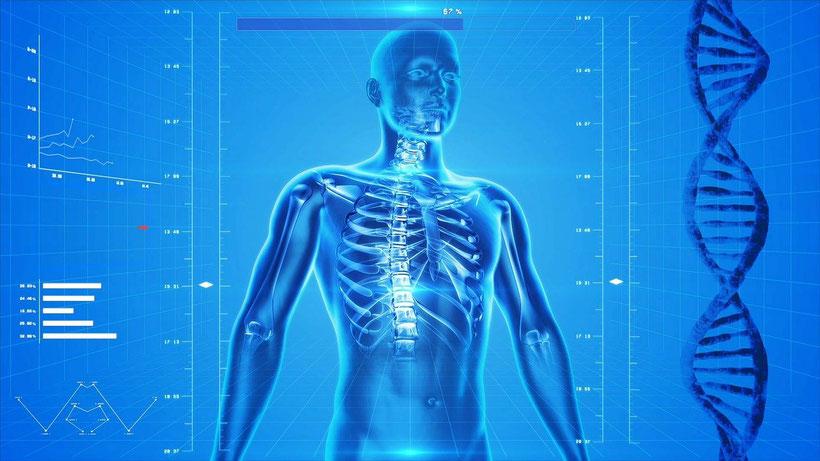 Körper, Schilddrüse