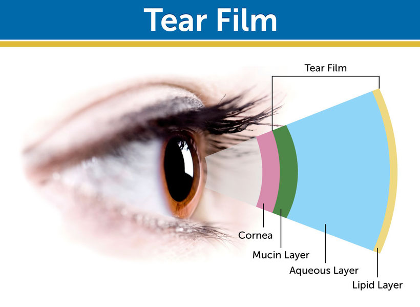 Aufbau Tränenfilm Abbildung
