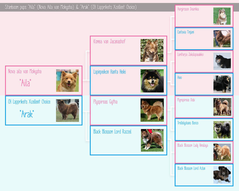 Stamboom van de pups van Aila & Arak - met dank aan Kayleigh Lubsen