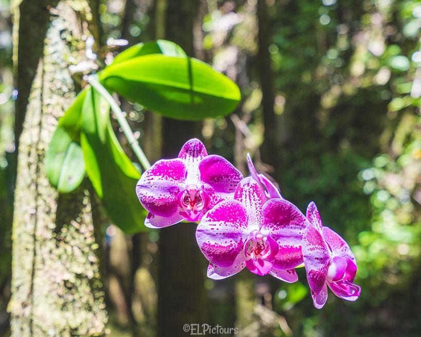 Tropical Botanical Garden, Big Island Hawaii