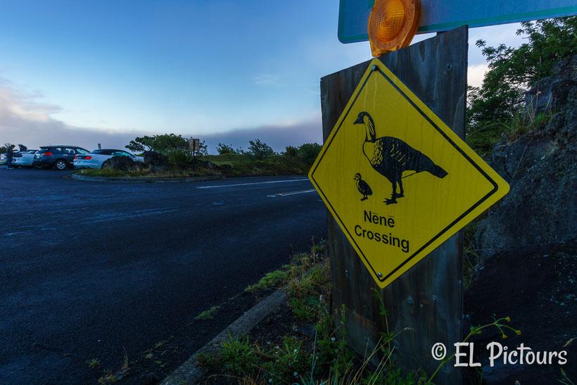 Haleakala Nationalpark, Maui, Hawaii