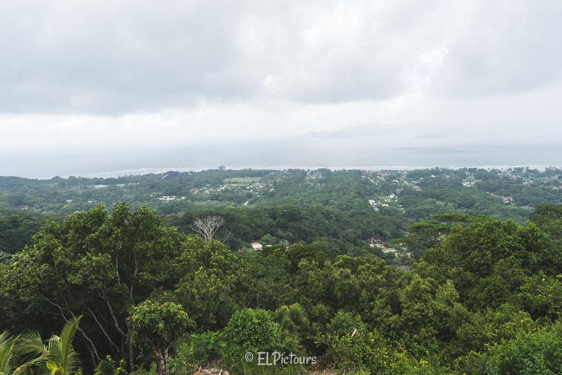 La Digue, Seychellen, Nid d'aigle