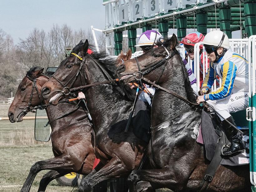 Bild: Pferde-Rennen
