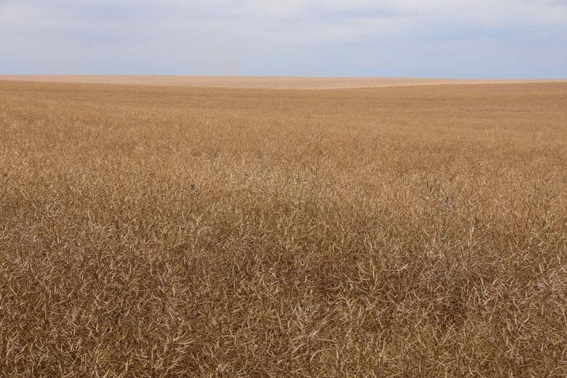 Endlose Weiten in der Uckermark - Landwirtschaft in anderen Maßstäben