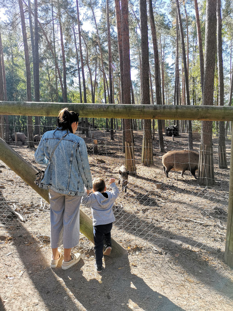 wildschwein gehege zirndorf
