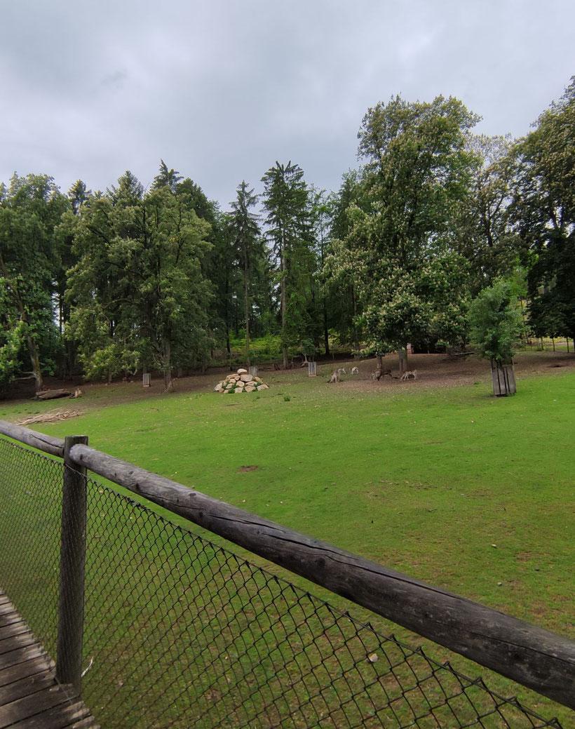 Galerie der Wildtiere Sparbach