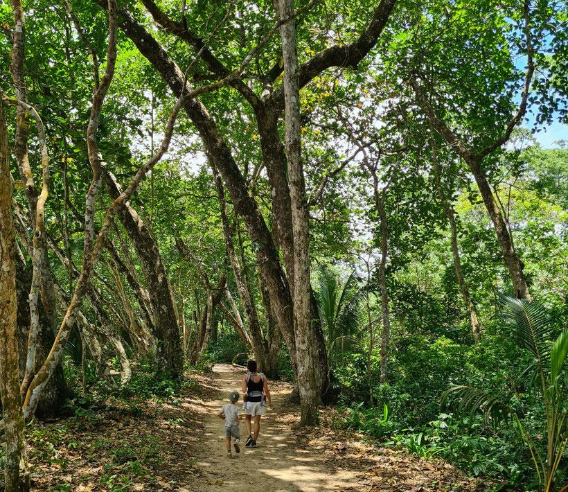 Nationalpark Manzanillo Costa Rica