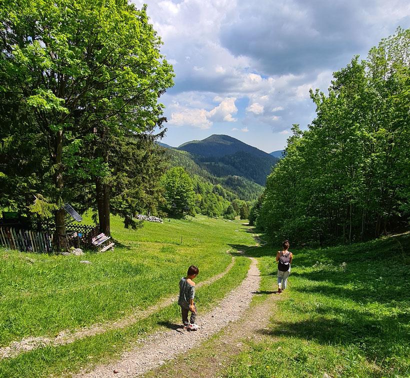 Wanderung vom Gipfel ins Tal Puchberg Puchis Welt