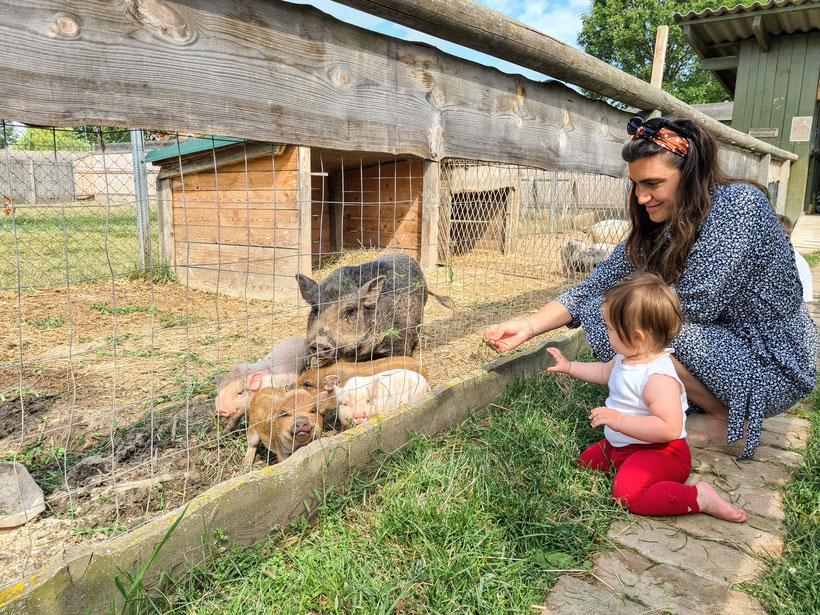 Burgenland Family Ranch Apfelhof Streichelzoo