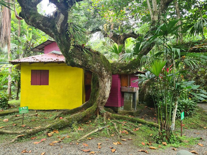 Cabinas Algebra Costa Rica Cahuita Unterkunft Kleinkind Kind