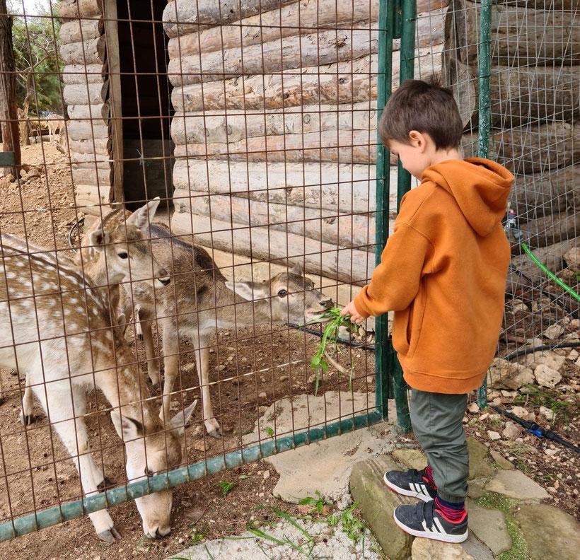 Nunu liebt Tiere und freut sich immer, wenn er ihnen Futter bringen darf.