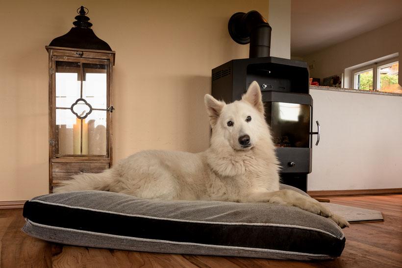 Weisser Schäferhund auf Zamperl-Hundekissen Größe XXXL  - Hundekissen mit Dinkelspelzfüllung
