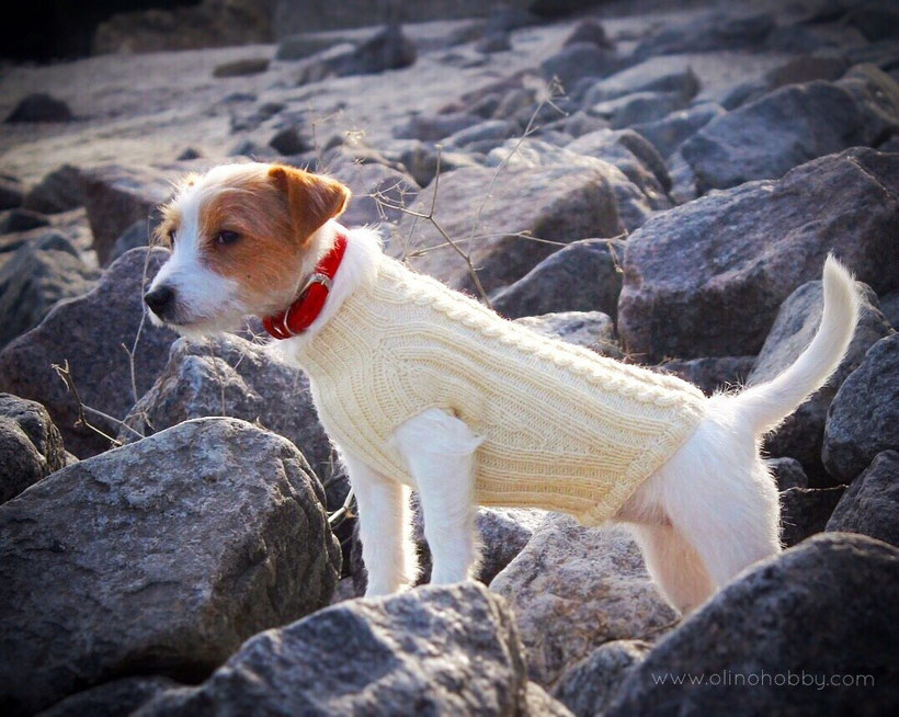 Knitted sweater for dog.
