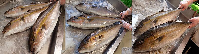 美味しいお寿司を宅配します 江東区 亀戸
