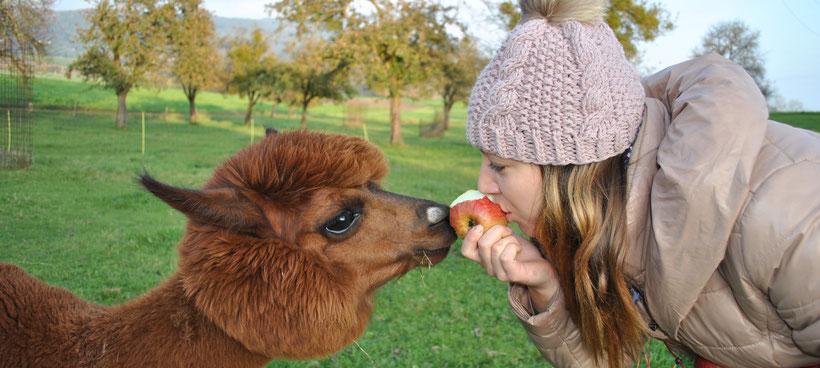 Balu will einen Apfel