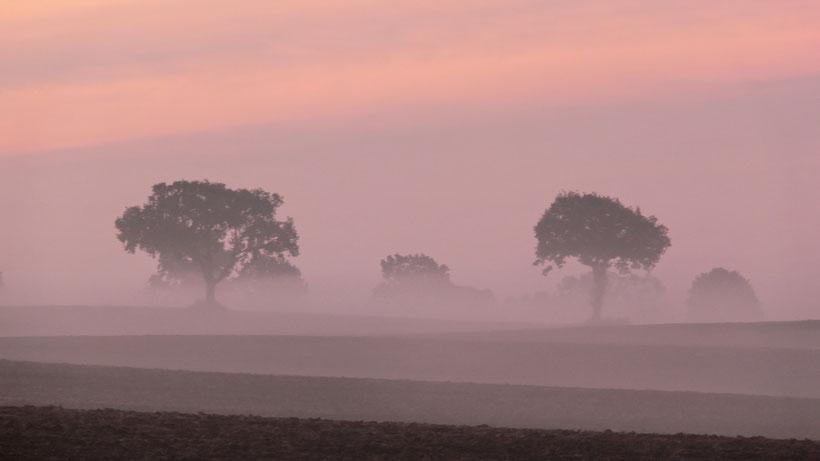 Schwansen im Nebel          -     Bild von H. Schmidt