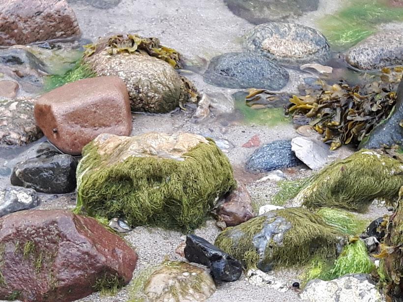 Vielfalt von Steinen am Strand eb
