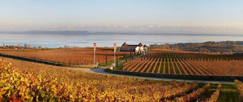 Fly and Wine, Helikopterflug mit Weindegustation, Domaine de Chambleau, Weingut mit Aussicht auf den See