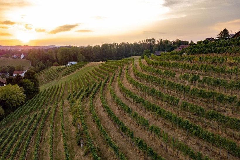 Fly and Wine, Helikopterflug mit Weindegustation,Weingut Bachmann, Stäfa, Reblage