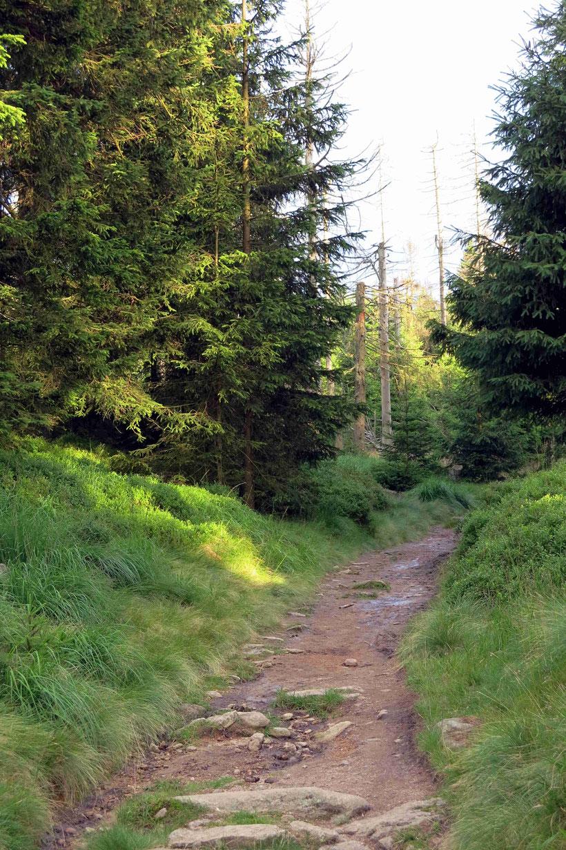 Wanderweg Harz Oderbrück Achtermann