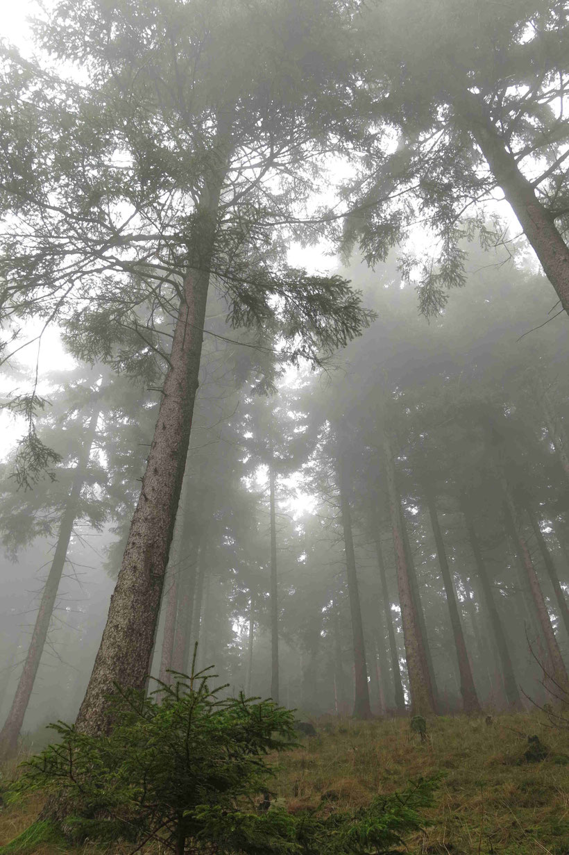 Harz Nebel