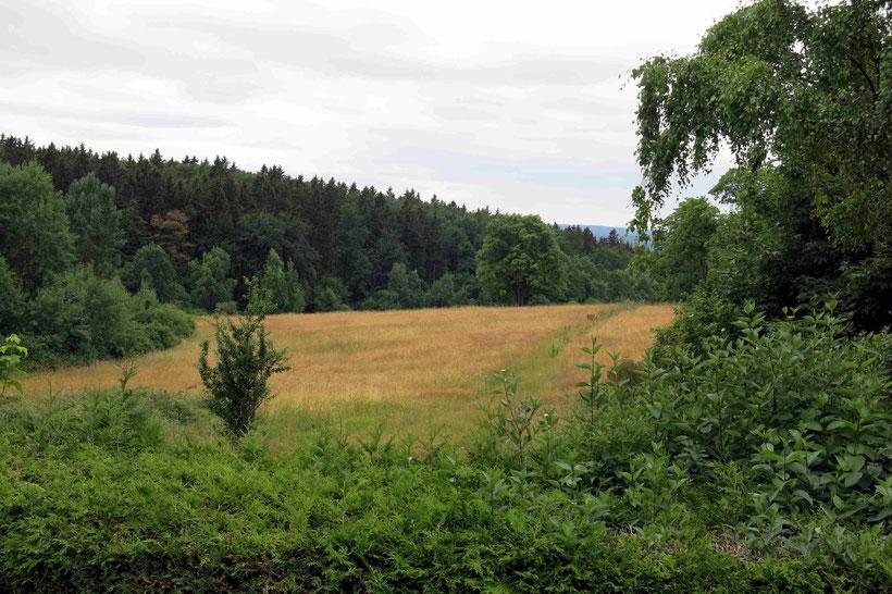 Friedrichsbrunn Aussicht vom Wintergarten Harzresidenz