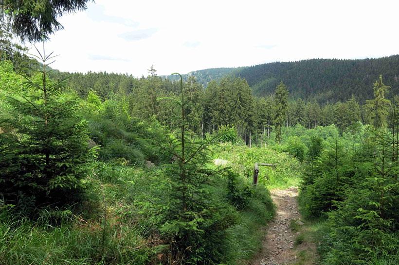 Wandern Sankt Andreasberg