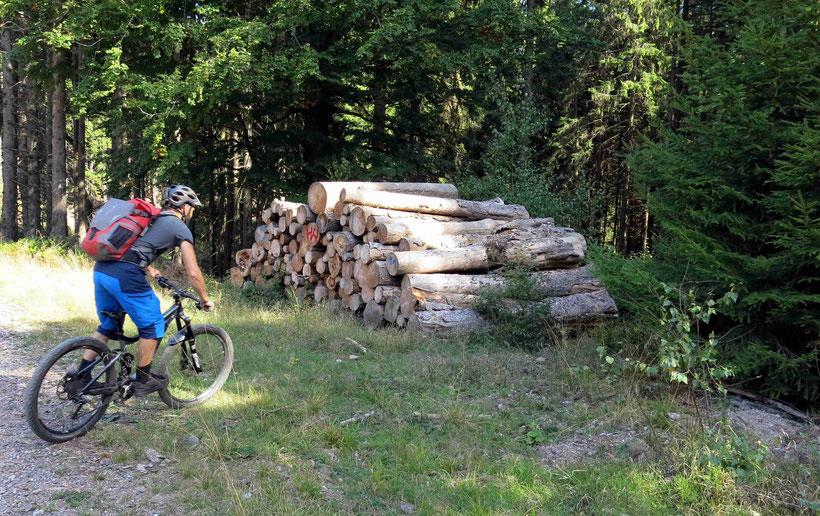 Sieht nicht so aus, aber vor dem Holzstapel beginnt ein Trail