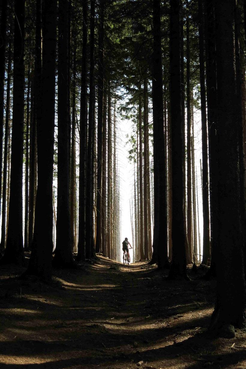 Mountainbiken Harz