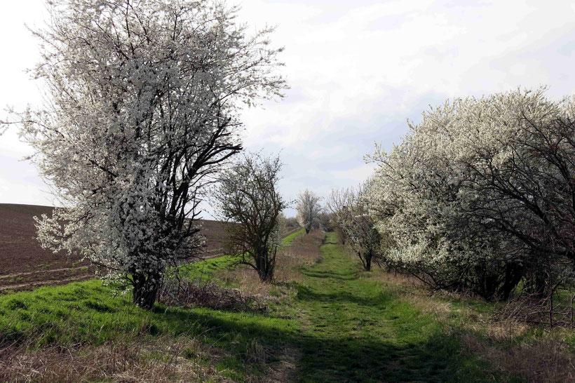 Wanderung Burgruine Arnstein