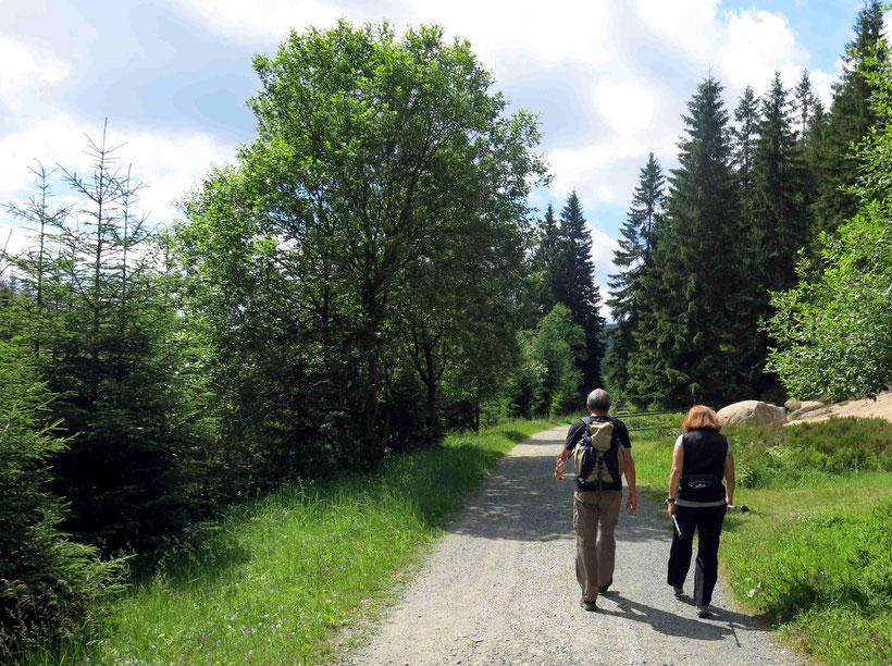 Oderteich Wandern
