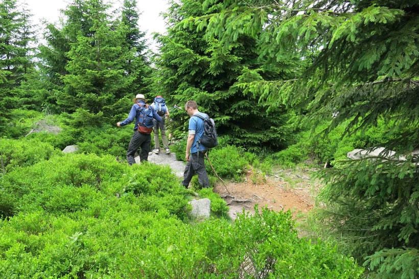 Wanderung Harz