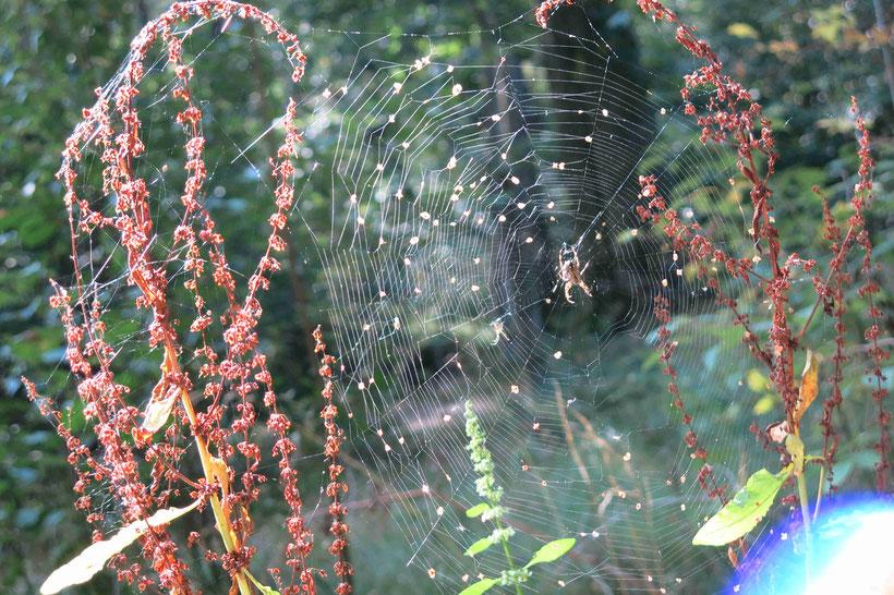 Spinnennetz, Harz