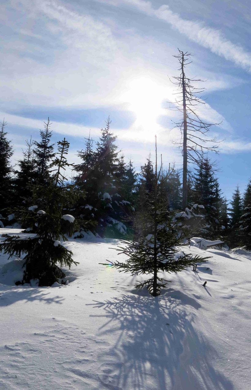 Winterwanderung Torfhaus