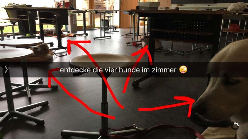 Dieser Snap entstand an einer Weiterbildung für Schulhundeteams in Basel.