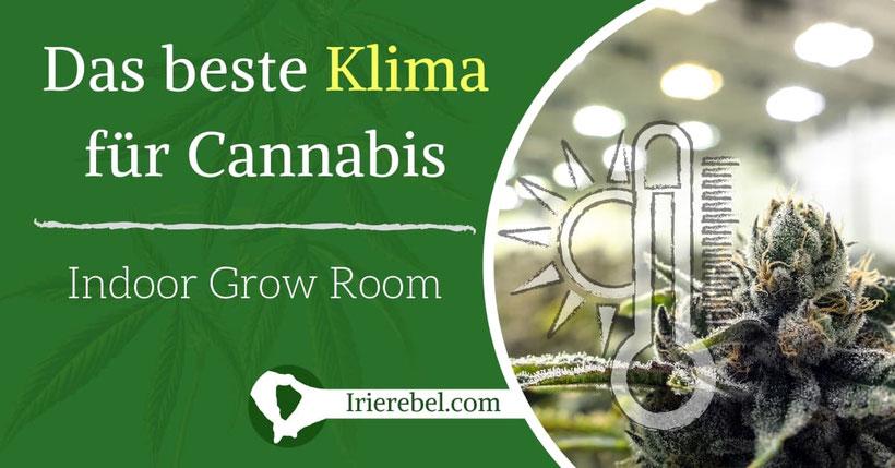 Erstelle das beste Klima für den Cannabis Grow Raum