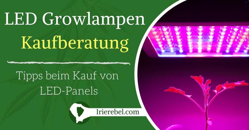 LED Grow Lampen Kaufberatung Tipps beim Kauf von LED-Panels