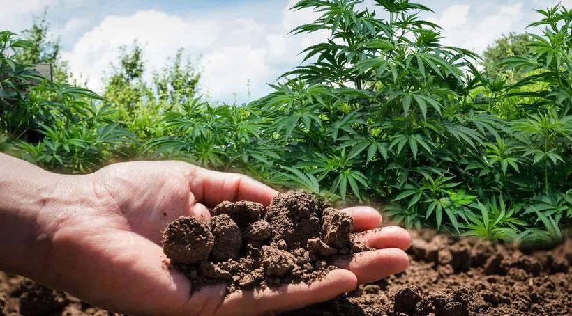 Den pH-Wert von Erde messen bei Cannabis