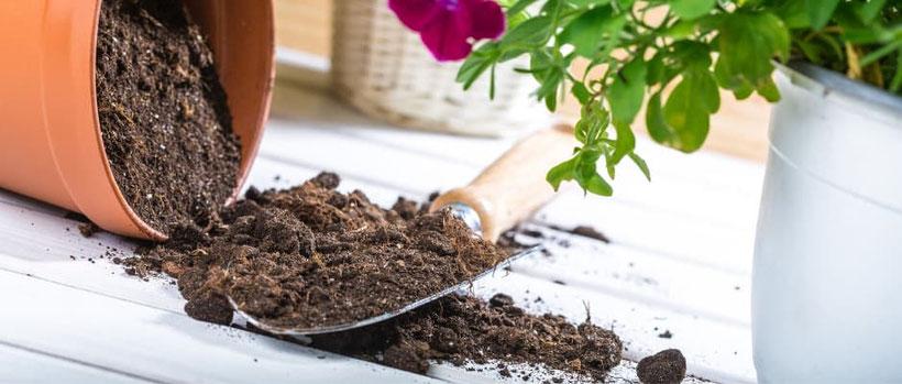 Die Wahl der Erde für Ihre Pflanzen