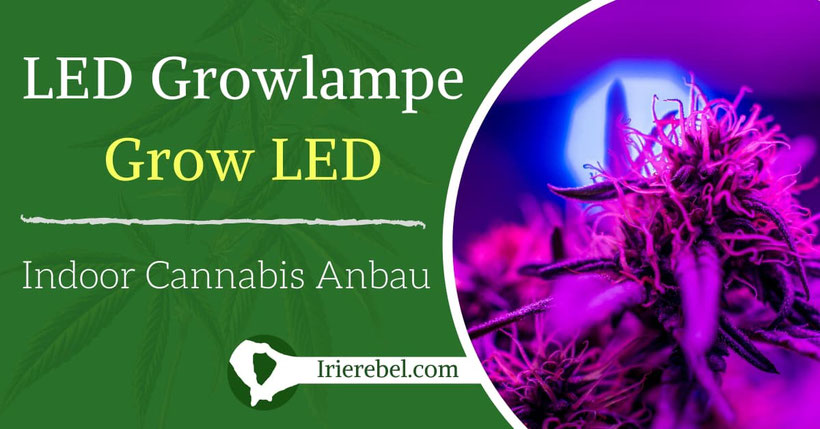 LED Grow Lampe für den Indoor Cannabis Anbau - Grow Led