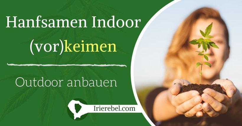 Hanfsamen Indoor keimen und Outdoor anbauen